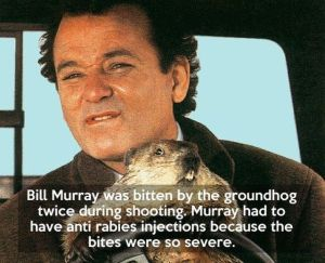 Groundhog Day factoid