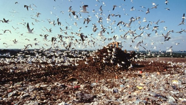 Birds-over-landfill_I-467-0168-912x516.jpg